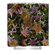 The Parade Of Stars Shower Curtain