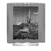 The Past Is Present Shower Curtain