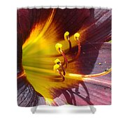 The Path To Divine Shower Curtain