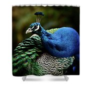 The Peacock - 365-320 Shower Curtain