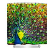 The Peacock Shower Curtain
