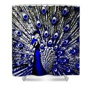 The Peacock Fan Shower Curtain