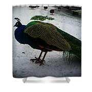 The Peacock In The Royal Garden In Winter Shower Curtain