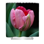 The Peculiar Pink Tulip Shower Curtain