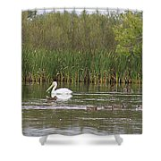 The Pelican And The Ducklings Shower Curtain