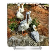 The Pelican Clan Shower Curtain