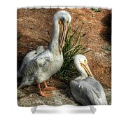 The Pelicans Shower Curtain