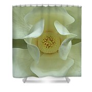 The Perfect Opening Magnolia Flower Art Shower Curtain