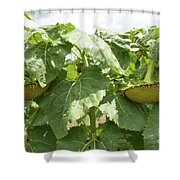 The Perfect Twin Shower Curtain