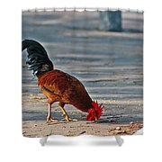 The Picking Rooster Shower Curtain
