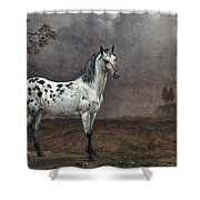 The Piebald Horse Shower Curtain