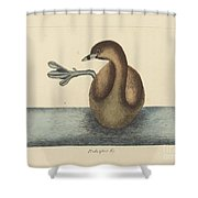 The Pied-billed Dobchick (colymbus Podiceps) Shower Curtain
