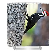 The Pileated Shower Curtain