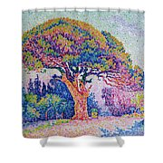 The Pine Tree At Saint Tropez Shower Curtain