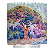 The Pine Tree At Saint Tropez Shower Curtain by Paul Signac
