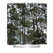 The Pines Of Tallahassee Shower Curtain