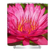 The Pinkest Of Pinks Shower Curtain by Lori Frisch