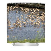 The Plovers Shower Curtain