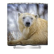 The Polar Bear Stare Shower Curtain