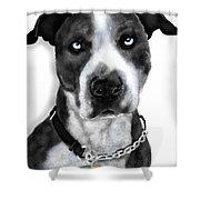 The Pooch With Blue Eyes Shower Curtain