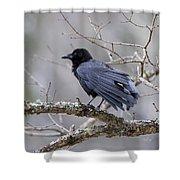 The Preening Crow Shower Curtain