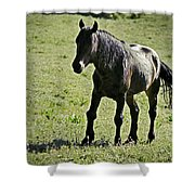 The Price Of War Shower Curtain