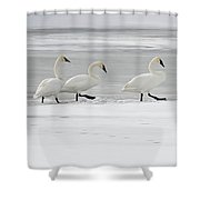 The Procession 8018 Shower Curtain