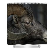 The Profile Shower Curtain