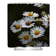 The Promise Of Fall Shower Curtain