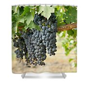 The Promise Of New Wine Shower Curtain