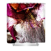 The Purple Lily. Shower Curtain