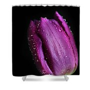 The Purple One Shower Curtain by Tracy Hall