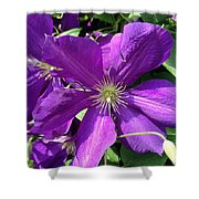 The Purple Sunny Day  Shower Curtain