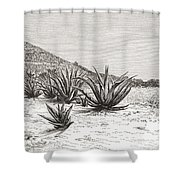 The Pyramid Of The Sun, Teotihuacan Shower Curtain