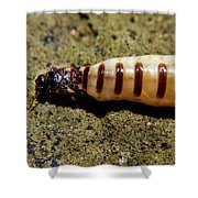 The Queen Of Termites Shower Curtain
