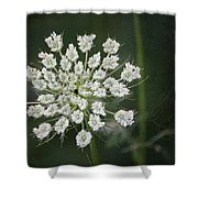 The Queens Lace Shower Curtain