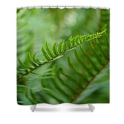 The Quiet Beauty Of Ferns Shower Curtain
