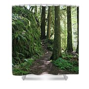 The Quiet Forest Shower Curtain
