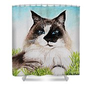 The Ragdoll Shower Curtain