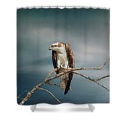 The Raptor - Osprey Shower Curtain