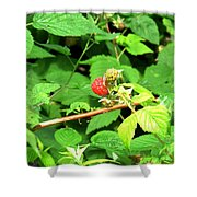 The Rasberry Patch Shower Curtain