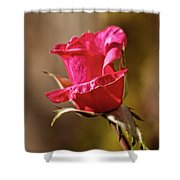 The Red Bud Shower Curtain