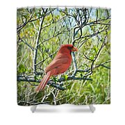 The Red Cardinal Shower Curtain