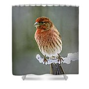 The Red Finch Shower Curtain