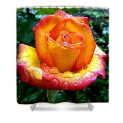 The Red Gold Rose Shower Curtain