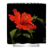 The Red Hibiscus Shower Curtain