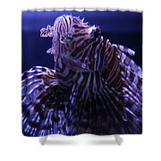 The Red Lionfish Shower Curtain