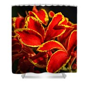 The Reds Of Winter Shower Curtain