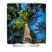 the Redwoods of Muir Woods Shower Curtain