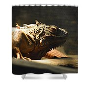 The Reptile World Shower Curtain